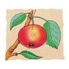Εικόνα της Μήλο.