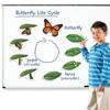 Εικόνα της Μαγνητικός κύκλος ζωής πεταλούδας.