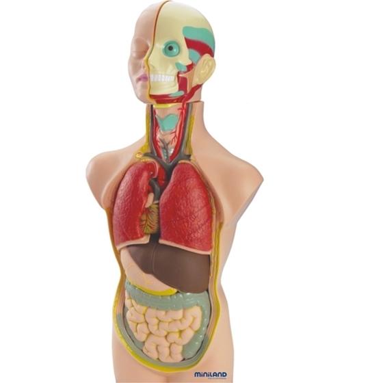 Εικόνα της Πρόπλασμα ανθρωπίνου σώματος